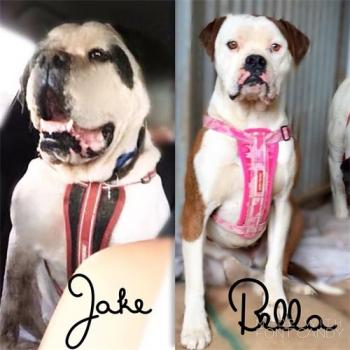 URGENT JAKE & BELLA